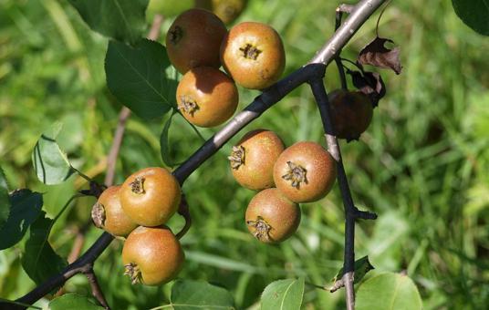 Сбор лесных плодов и ягод