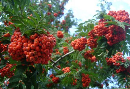 Плодосовхозы сады в лесах