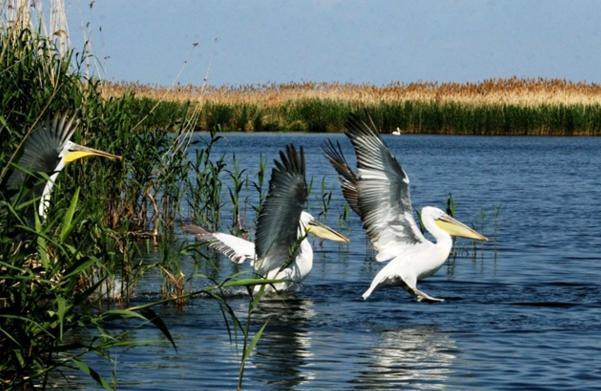 Колонии птиц в дельте Волги