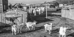 Факторинг как инструмент поддержки сельскохозяйственных предприятий